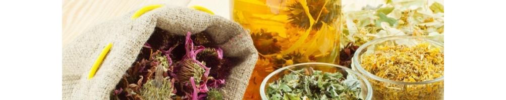 Tè e tisane in cialde e in Capsule i migliori marchi selezionati